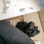 Közben Samu kutya befeküdt az én lábam alá