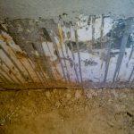 Az őskövület ragaszkodott a téglákhoz, végül ez lett a fal síkja